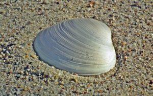 zöldkagyló kapszula